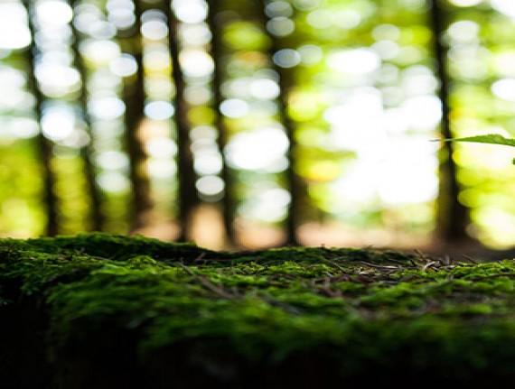 Relatório Anual de Licenciamento Ambiental
