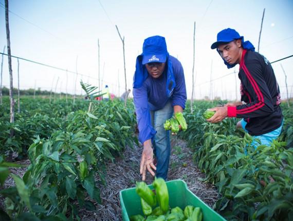 Trabalhadores rurais de Timon receberão capacitação técnica do SENAR