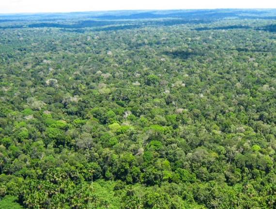 Publicada lei da compensação ambiental
