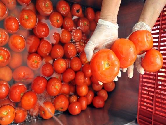 Mais de 50 municípios maranhenses integram o Sisan, Sistema Nacional de Segurança Alimentar e Nutricional