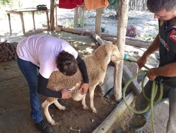 Secretaria Municipal de Agricultura, Pecuária e Abastecimento disponibiliza atendimento veterinário…